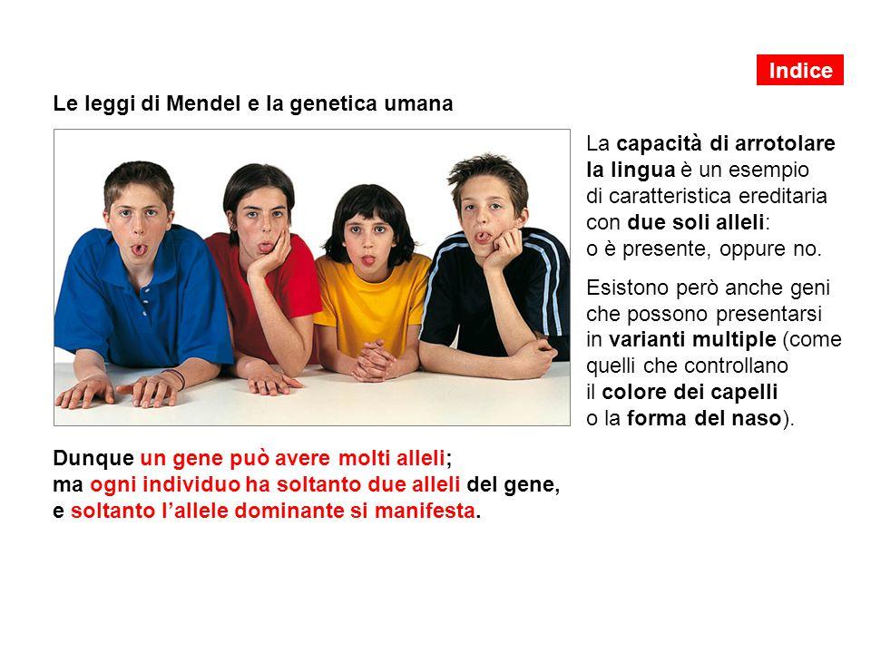 Le leggi di Mendel e la genetica umana La capacità di arrotolare la lingua è un esempio di caratteristica ereditaria con due soli alleli: o è presente