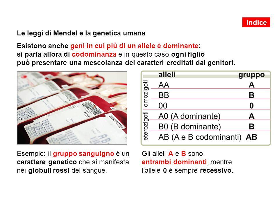 Le leggi di Mendel e la genetica umana Esistono anche geni in cui più di un allele è dominante: si parla allora di codominanza e in questo caso ogni f