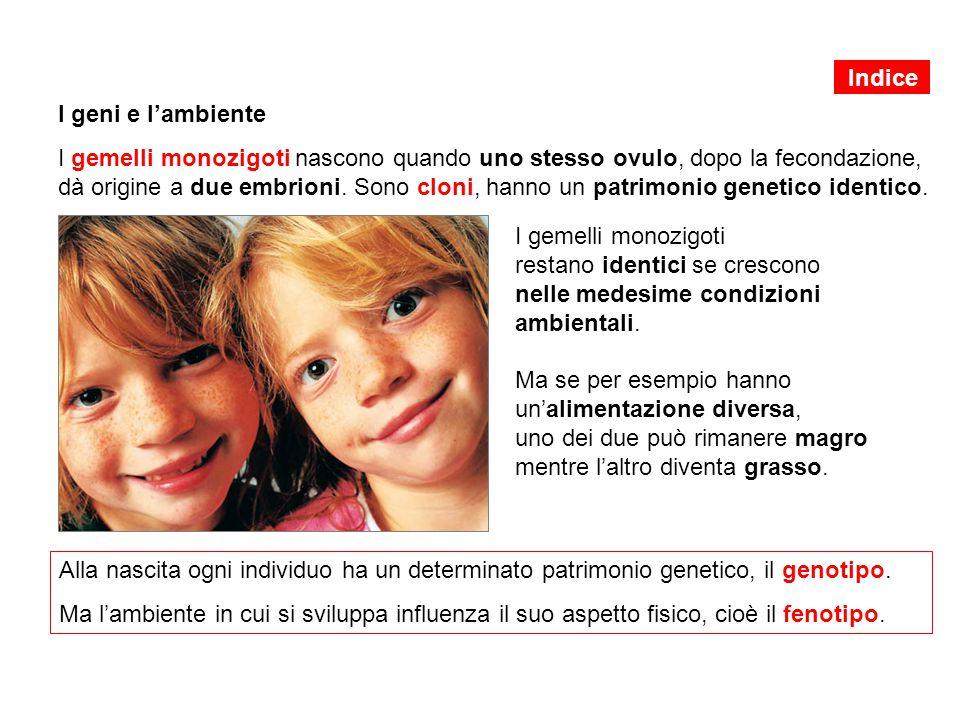 I geni e l'ambiente I gemelli monozigoti nascono quando uno stesso ovulo, dopo la fecondazione, dà origine a due embrioni. Sono cloni, hanno un patrim