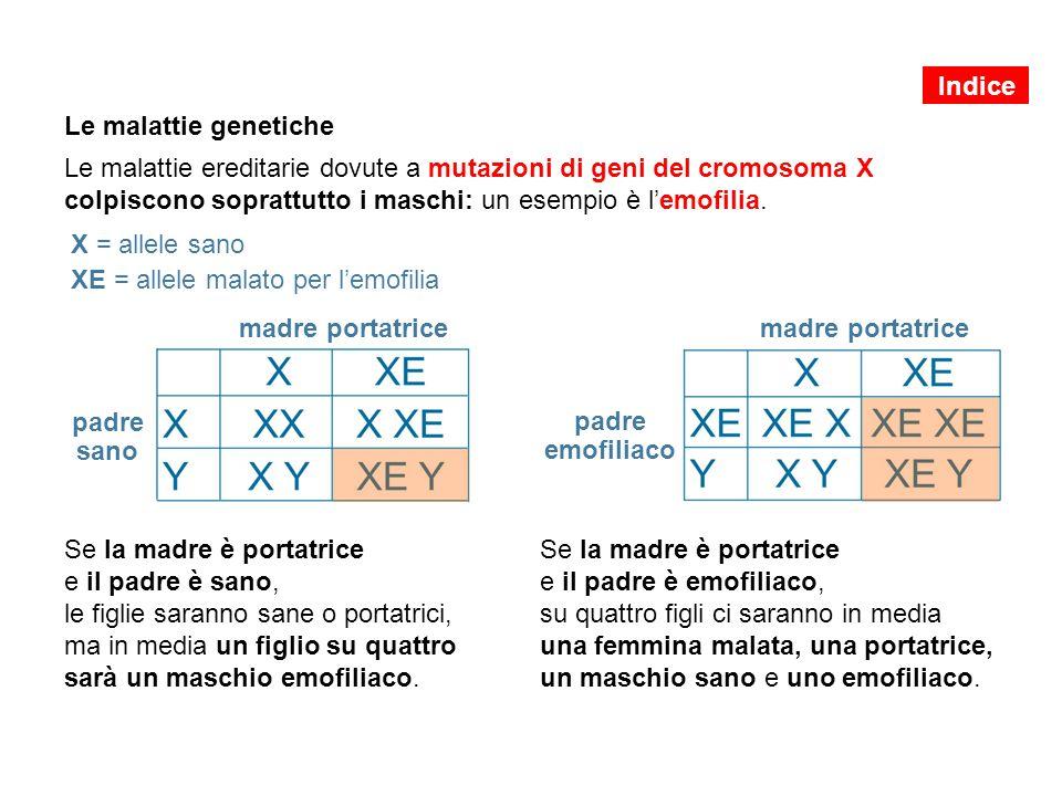 Le malattie genetiche Le malattie ereditarie dovute a mutazioni di geni del cromosoma X colpiscono soprattutto i maschi: un esempio è l'emofilia. Se l