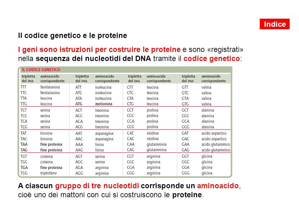 Il codice genetico e le proteine I geni sono istruzioni per costruire le proteine e sono «registrati» nella sequenza dei nucleotidi del DNA tramite il