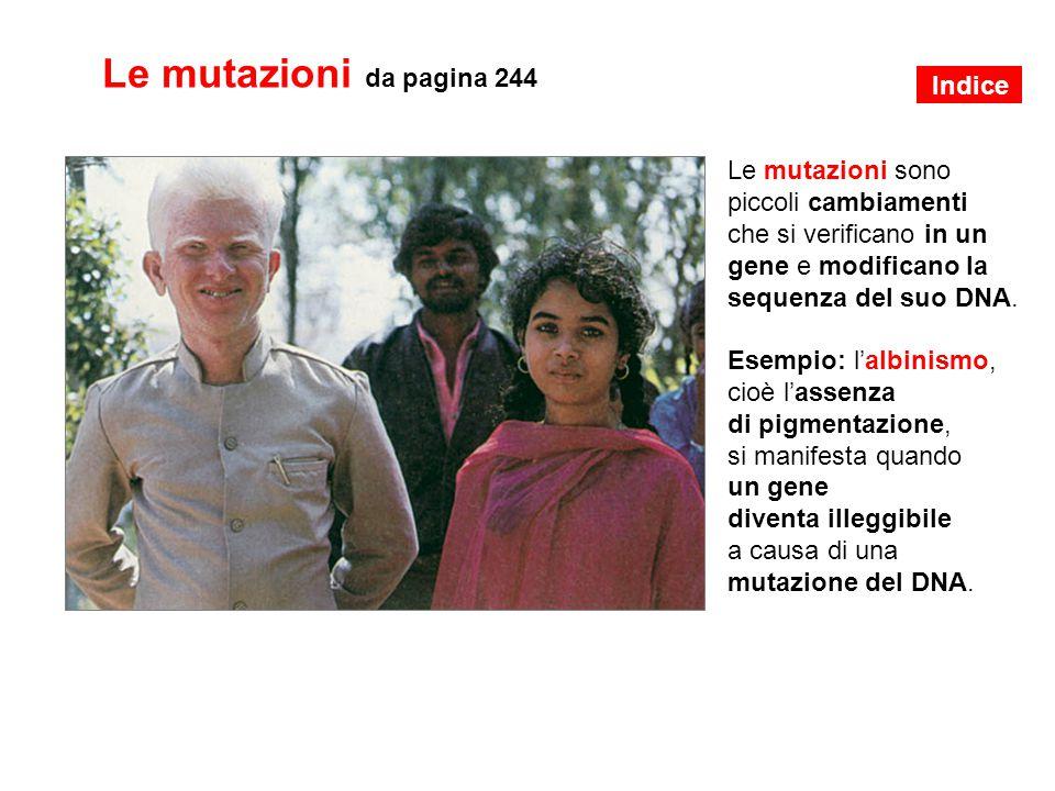 Le mutazioni da pagina 244 Le mutazioni sono piccoli cambiamenti che si verificano in un gene e modificano la sequenza del suo DNA. Esempio: l'albinis
