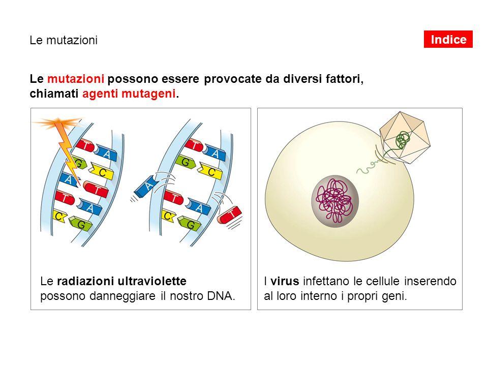 Le mutazioni Le mutazioni possono essere provocate da diversi fattori, chiamati agenti mutageni. Le radiazioni ultraviolette possono danneggiare il no