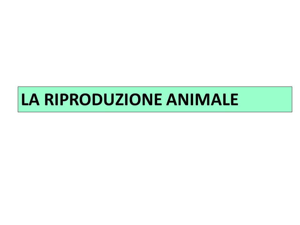 B)-organismi con processi eusessuali (organismi superiori) in cui si ha uno scambio di materiale genetico che coinvolge tutto il genoma: GAMETI MASCHILI E FEMMINILI A)-organismi con processi protosessuali (coniugazione e trasduzione batterica)