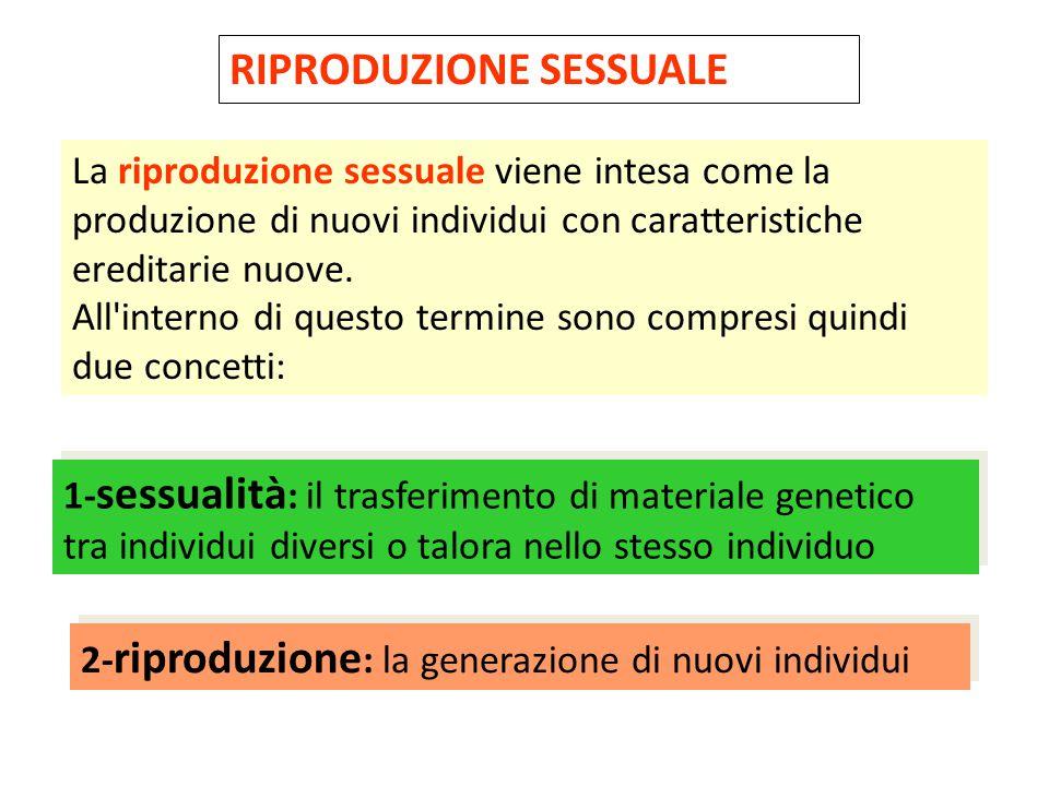 RIPRODUZIONE SESSUALE La riproduzione sessuale viene intesa come la produzione di nuovi individui con caratteristiche ereditarie nuove. All'interno di