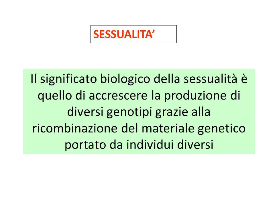 SESSUALITA' Il significato biologico della sessualità è quello di accrescere la produzione di diversi genotipi grazie alla ricombinazione del material