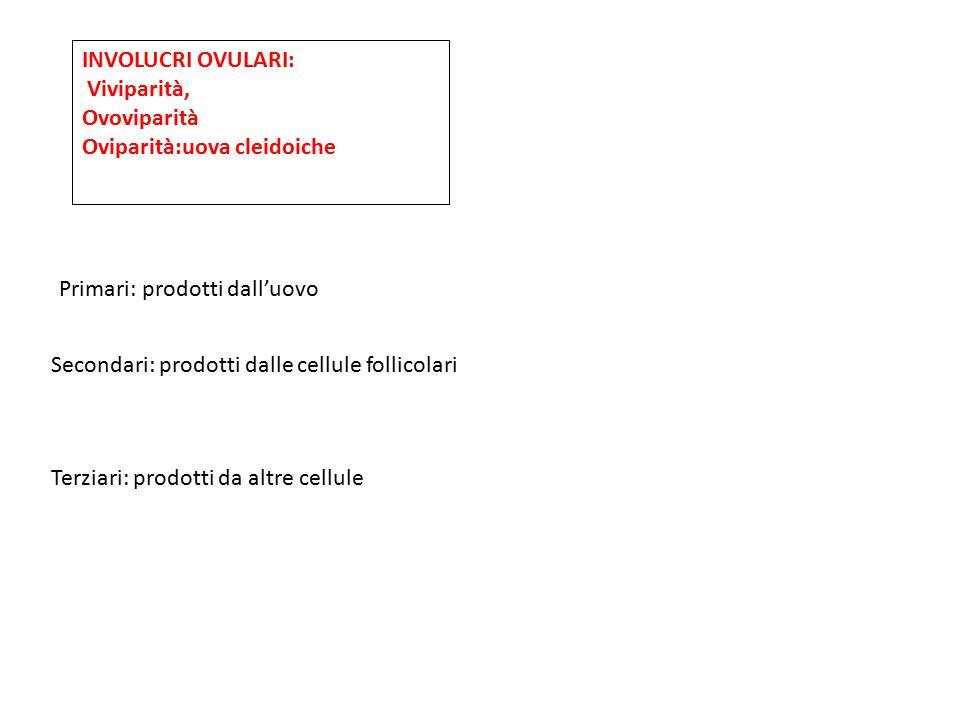 Primari: prodotti dall'uovo Secondari: prodotti dalle cellule follicolari Terziari: prodotti da altre cellule INVOLUCRI OVULARI: Viviparità, Ovovipari
