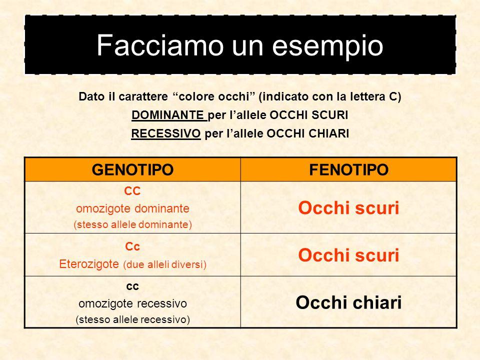 Le parole della genetica GENOTIPO alleli di un certo gene/carattere aspetto esteriore di un gene/carattere FENOTIPO Il genotipo è scritto nel DNA Il fenotipo è ciò che si vede: esempio occhi azzurri GENOTIPI DIVERSI possono avere lo STESSO FENOTIPO