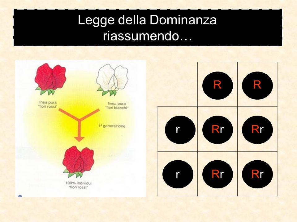 GENOTIPO omozigote recessivo Legge della Dominanza vediamo gli incroci GENOTIPO omozigote dominante Rr GENOTIPO eterozigote Il fenotipo è il colore del fiore (rosso o bianco) RRrr