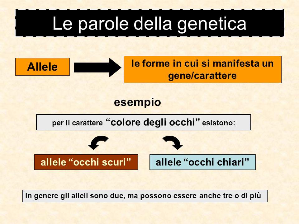 Legge dell'indipendenza dei caratteri (terza Legge di Mendel) Incrociando individui di linea pura che differiscono per due caratteri si osserva che alleli di un gene si separano in modo indipendente dagli alleli di un altro gene.