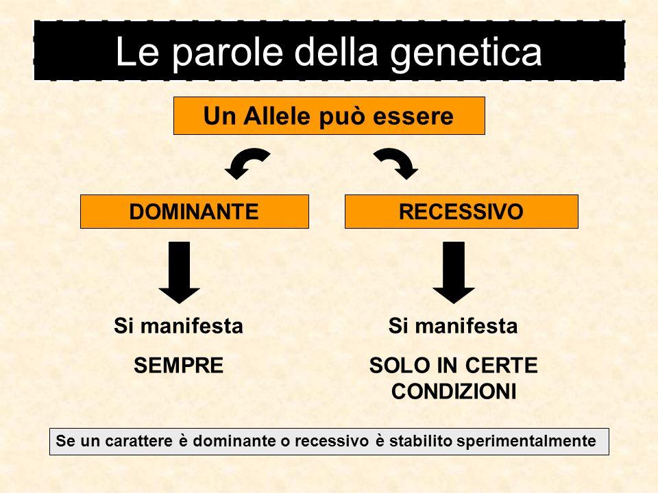 Le parole della genetica Allele le forme in cui si manifesta un gene/carattere per il carattere colore degli occhi esistono: esempio allele occhi scuri allele occhi chiari in genere gli alleli sono due, ma possono essere anche tre o di più