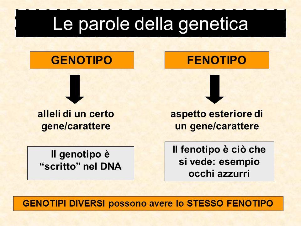 Le parole della genetica Un Allele può essere DOMINANTERECESSIVO Si manifesta SEMPRE Si manifesta SOLO IN CERTE CONDIZIONI Se un carattere è dominante o recessivo è stabilito sperimentalmente