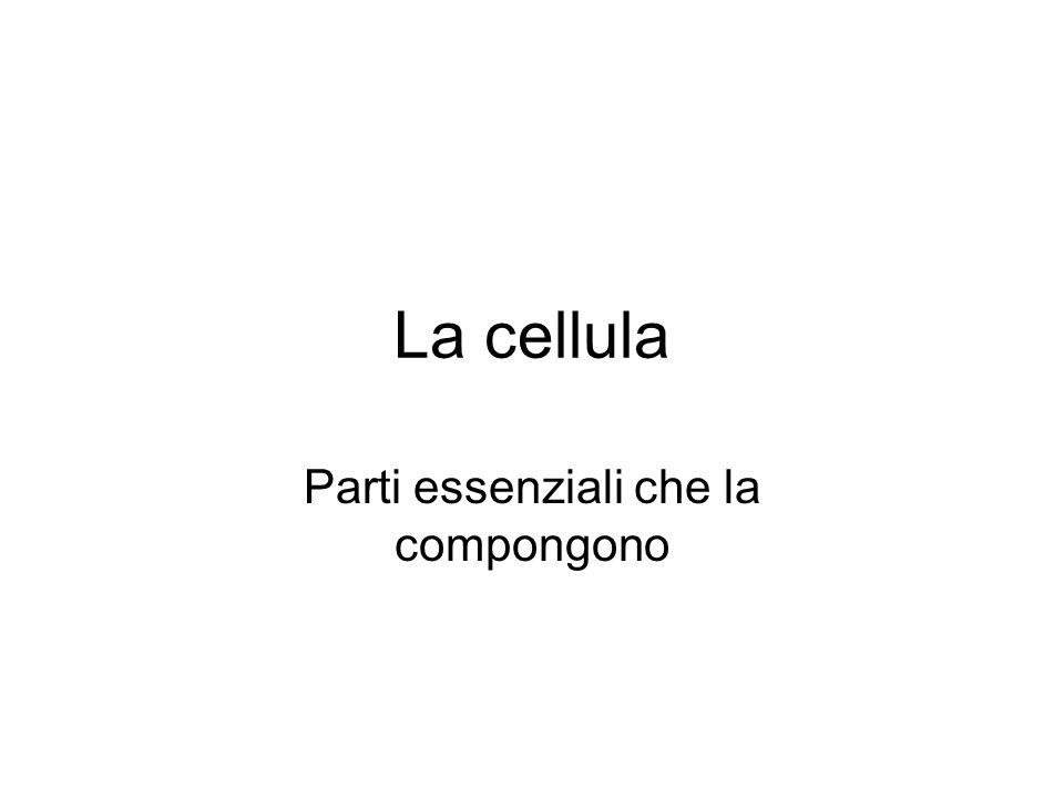 La cellula Parti essenziali che la compongono
