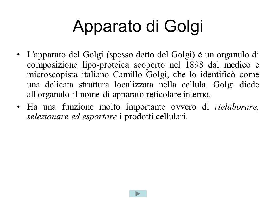 Apparato di Golgi L apparato del Golgi (spesso detto del Golgi) è un organulo di composizione lipo-proteica scoperto nel 1898 dal medico e microscopista italiano Camillo Golgi, che lo identificò come una delicata struttura localizzata nella cellula.