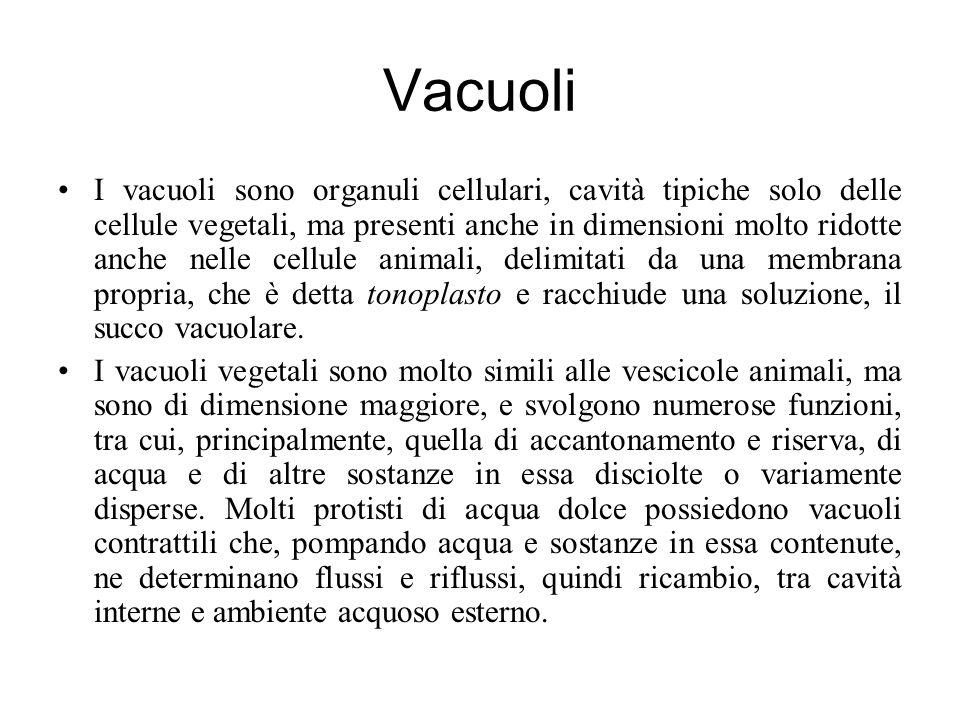 Vacuoli I vacuoli sono organuli cellulari, cavità tipiche solo delle cellule vegetali, ma presenti anche in dimensioni molto ridotte anche nelle cellule animali, delimitati da una membrana propria, che è detta tonoplasto e racchiude una soluzione, il succo vacuolare.