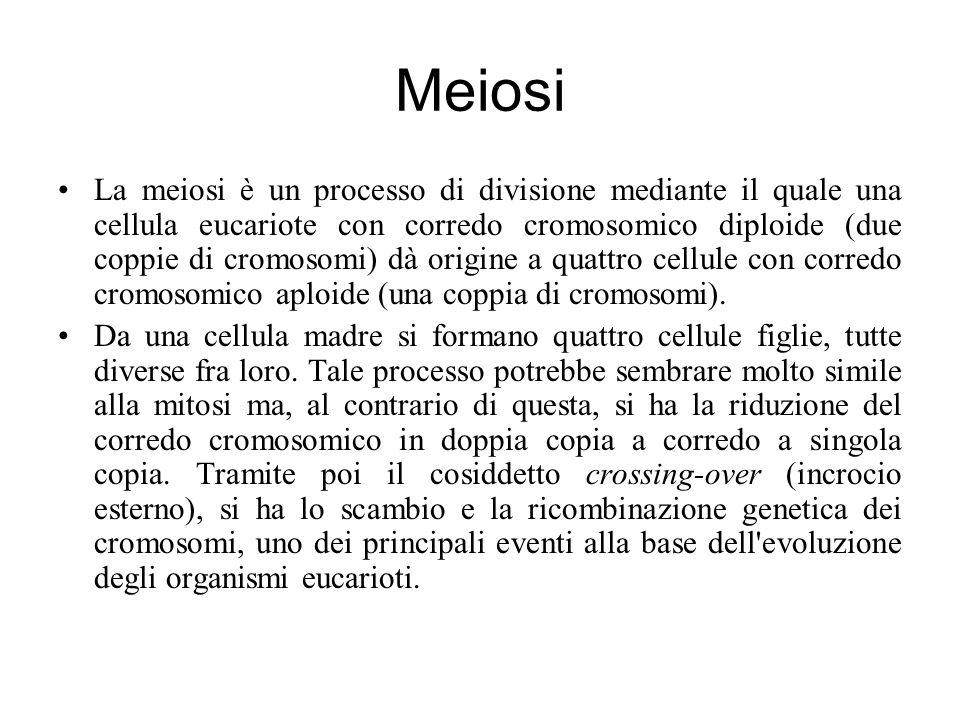 Meiosi La meiosi è un processo di divisione mediante il quale una cellula eucariote con corredo cromosomico diploide (due coppie di cromosomi) dà origine a quattro cellule con corredo cromosomico aploide (una coppia di cromosomi).