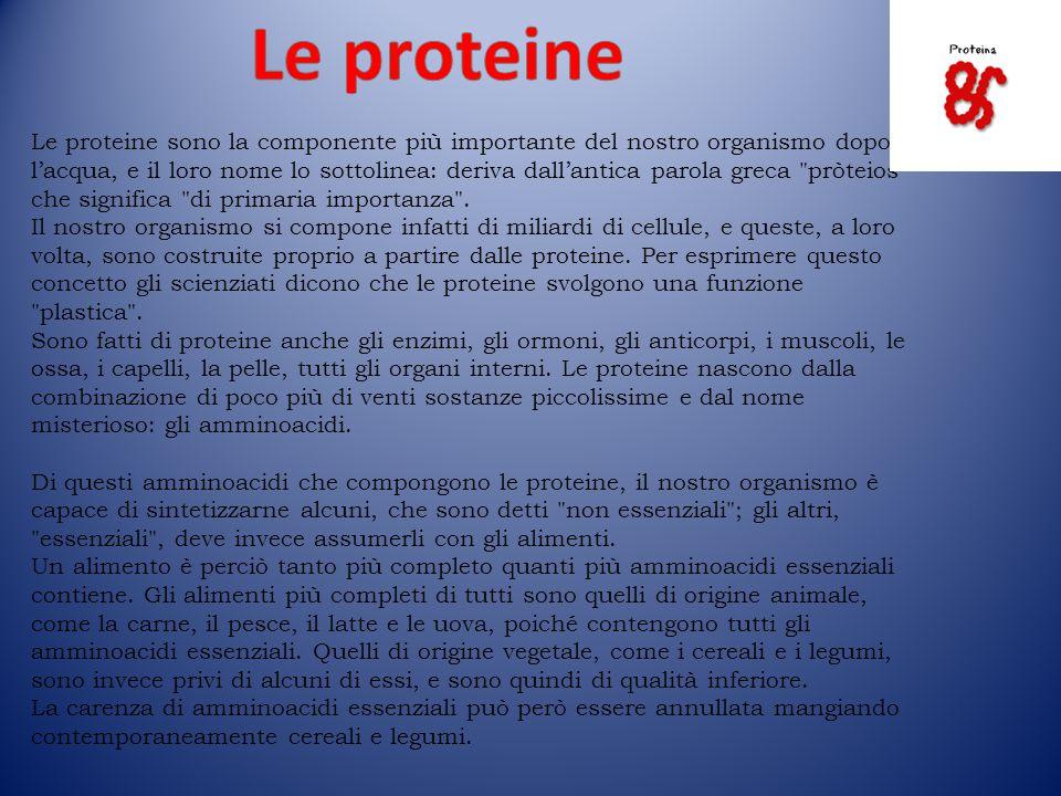 Le proteine sono la componente più importante del nostro organismo dopo l'acqua, e il loro nome lo sottolinea: deriva dall'antica parola greca pròteios che significa di primaria importanza .