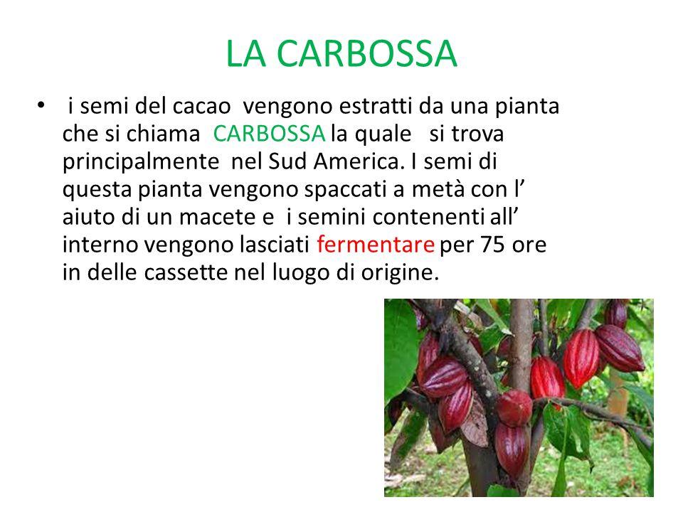 LA CARBOSSA i semi del cacao vengono estratti da una pianta che si chiama CARBOSSA la quale si trova principalmente nel Sud America. I semi di questa