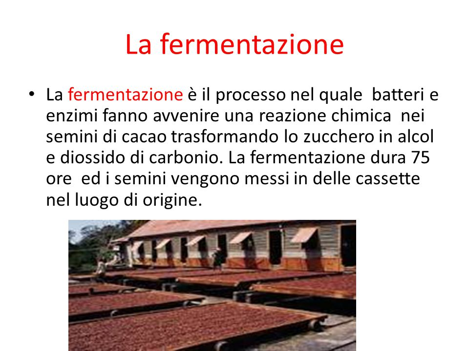 La fermentazione La fermentazione è il processo nel quale batteri e enzimi fanno avvenire una reazione chimica nei semini di cacao trasformando lo zuc