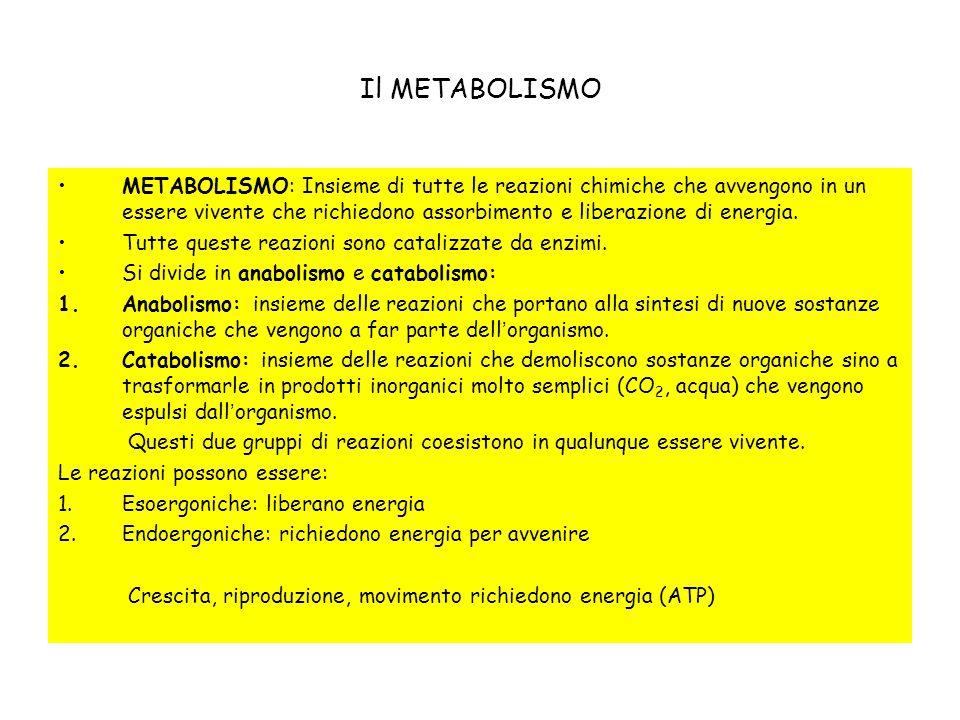 Il METABOLISMO METABOLISMO: Insieme di tutte le reazioni chimiche che avvengono in un essere vivente che richiedono assorbimento e liberazione di ener