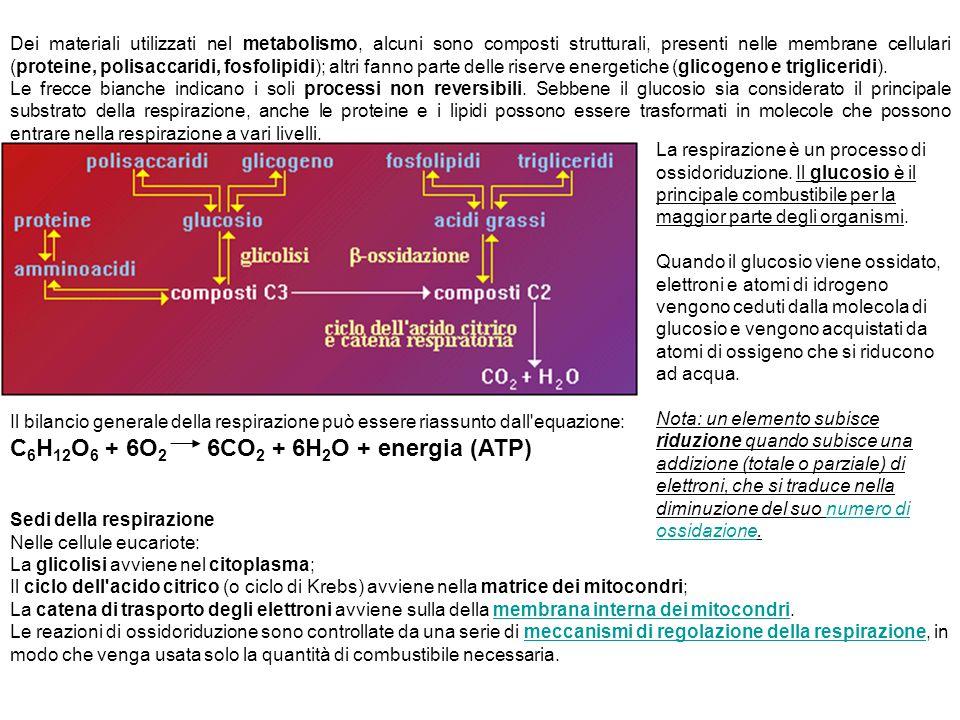 Dei materiali utilizzati nel metabolismo, alcuni sono composti strutturali, presenti nelle membrane cellulari (proteine, polisaccaridi, fosfolipidi);