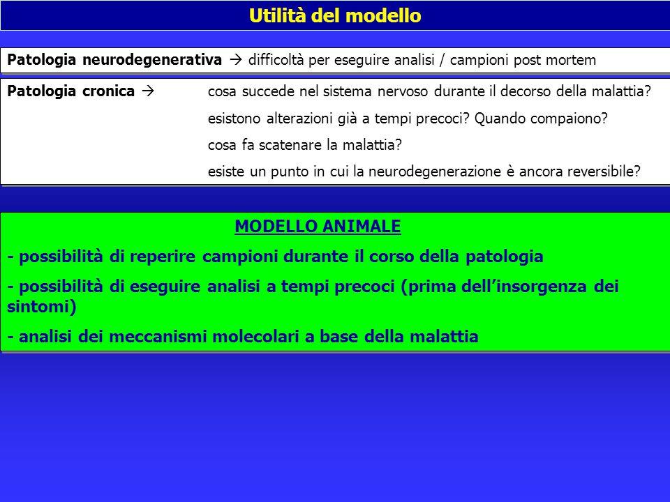 Utilità del modello Patologia neurodegenerativa  difficoltà per eseguire analisi / campioni post mortem Patologia cronica  cosa succede nel sistema