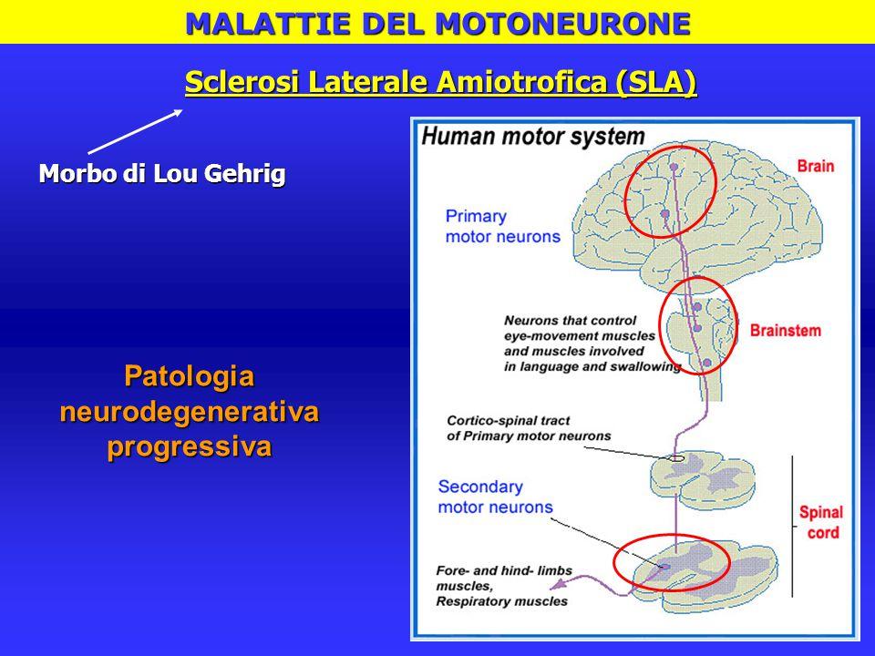 Farmaci disponibili:  Riluzolo Incidenza: 1-3 / 100'000 Prevalenza:4-6 / 100'000 Sintomatologia:  Debolezza muscolare, fascicolazioni, iperriflessia  Difficoltà nella deglutizione e nell'articolazione del linguaggio  Progressivo peggioramento dell'atrofia muscolare, infine paralisi  Morte / Insufficienza respiratoria (muscoli toracici / diaframma) Onset: 4^ – 5^ decade di vita Sopravvivenza: 3-5 anni dalla diagnosi Sclerosi Laterale Amiotrofica (SLA)