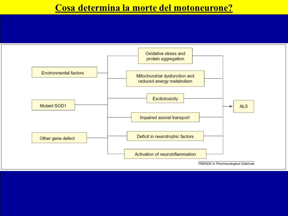 Cosa determina la morte del motoneurone?