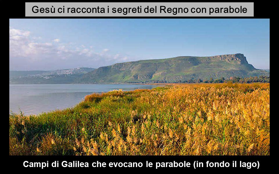 Campi di Galilea che evocano le parabole (in fondo il lago) Gesù ci racconta i segreti del Regno con parabole