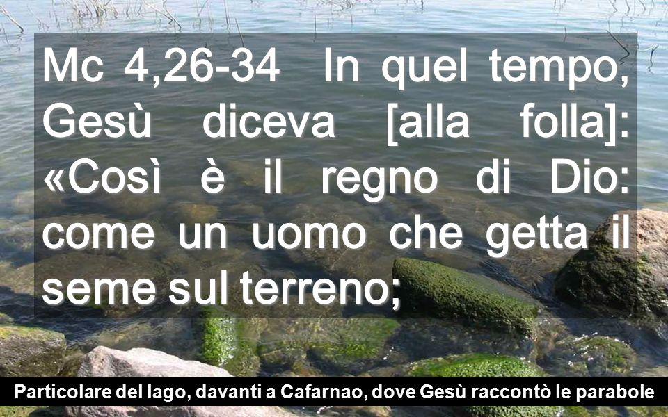 Mc 4,26-34 In quel tempo, Gesù diceva [alla folla]: «Così è il regno di Dio: come un uomo che getta il seme sul terreno; Particolare del lago, davanti a Cafarnao, dove Gesù raccontò le parabole