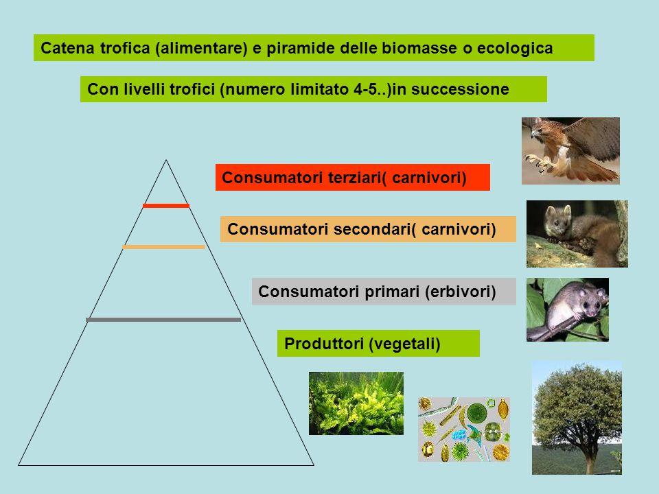 Catena trofica (alimentare) e piramide delle biomasse o ecologica Con livelli trofici (numero limitato 4-5..)in successione Produttori (vegetali) Cons