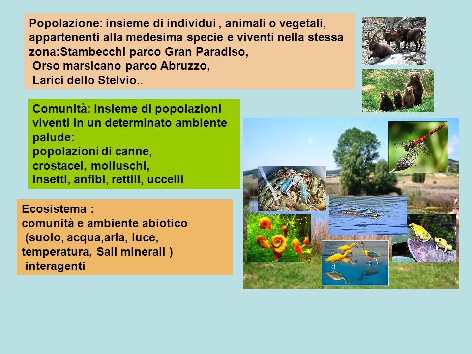 Popolazione: insieme di individui, animali o vegetali, appartenenti alla medesima specie e viventi nella stessa zona:Stambecchi parco Gran Paradiso, O