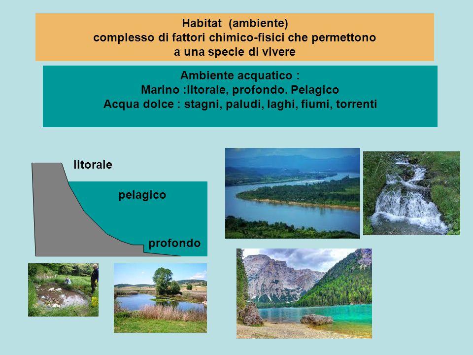 Habitat (ambiente) complesso di fattori chimico-fisici che permettono a una specie di vivere Ambiente acquatico : Marino :litorale, profondo. Pelagico