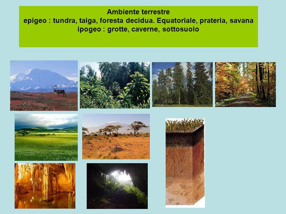 Ambiente terrestre epigeo : tundra, taiga, foresta decidua. Equatoriale, prateria, savana ipogeo : grotte, caverne, sottosuolo