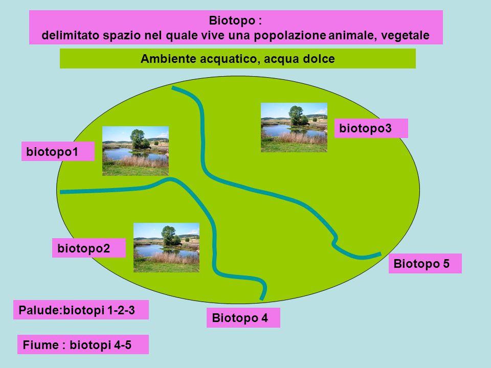 Biotopo : delimitato spazio nel quale vive una popolazione animale, vegetale Ambiente acquatico, acqua dolce biotopo1 biotopo2 biotopo3 Biotopo 4 Biot