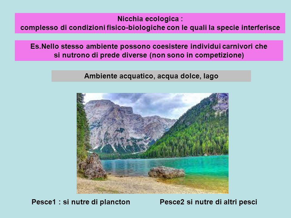 Nicchia ecologica : complesso di condizioni fisico-biologiche con le quali la specie interferisce Es.Nello stesso ambiente possono coesistere individu