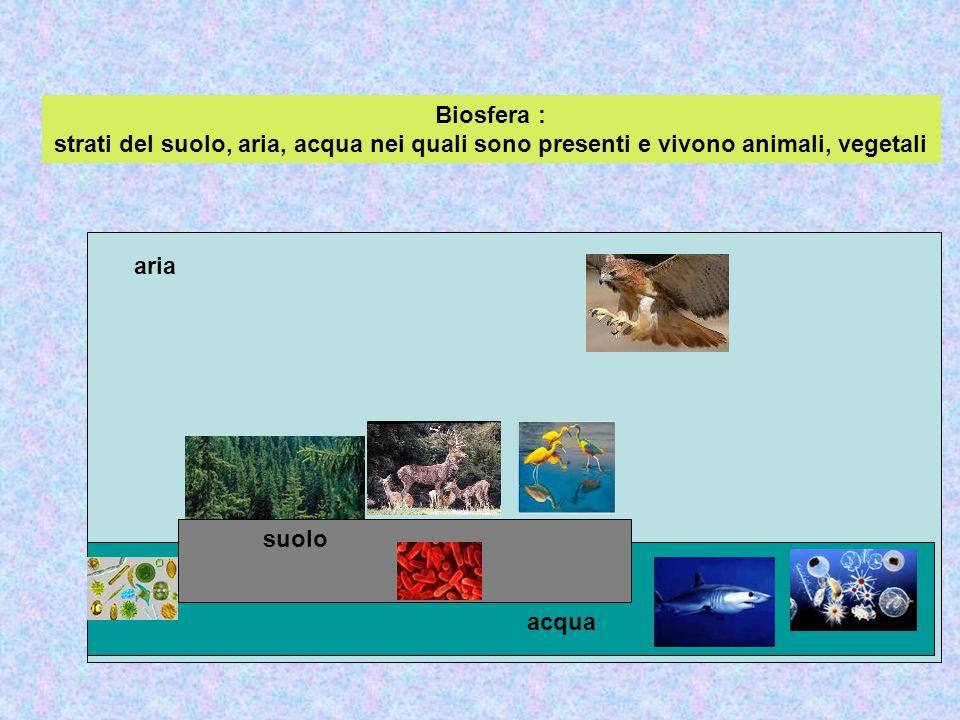 Biosfera : strati del suolo, aria, acqua nei quali sono presenti e vivono animali, vegetali suolo acqua aria