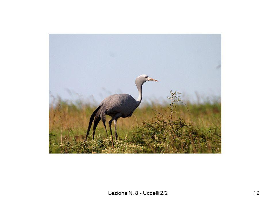 Lezione N. 8 - Uccelli 2/212