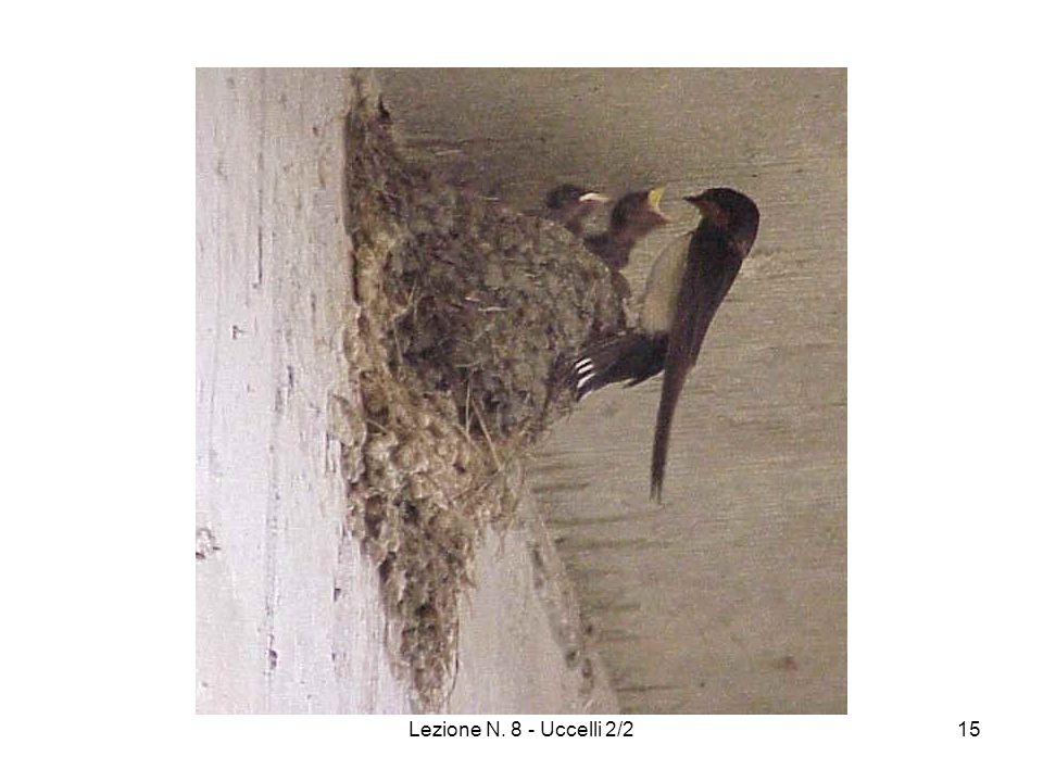 Lezione N. 8 - Uccelli 2/215