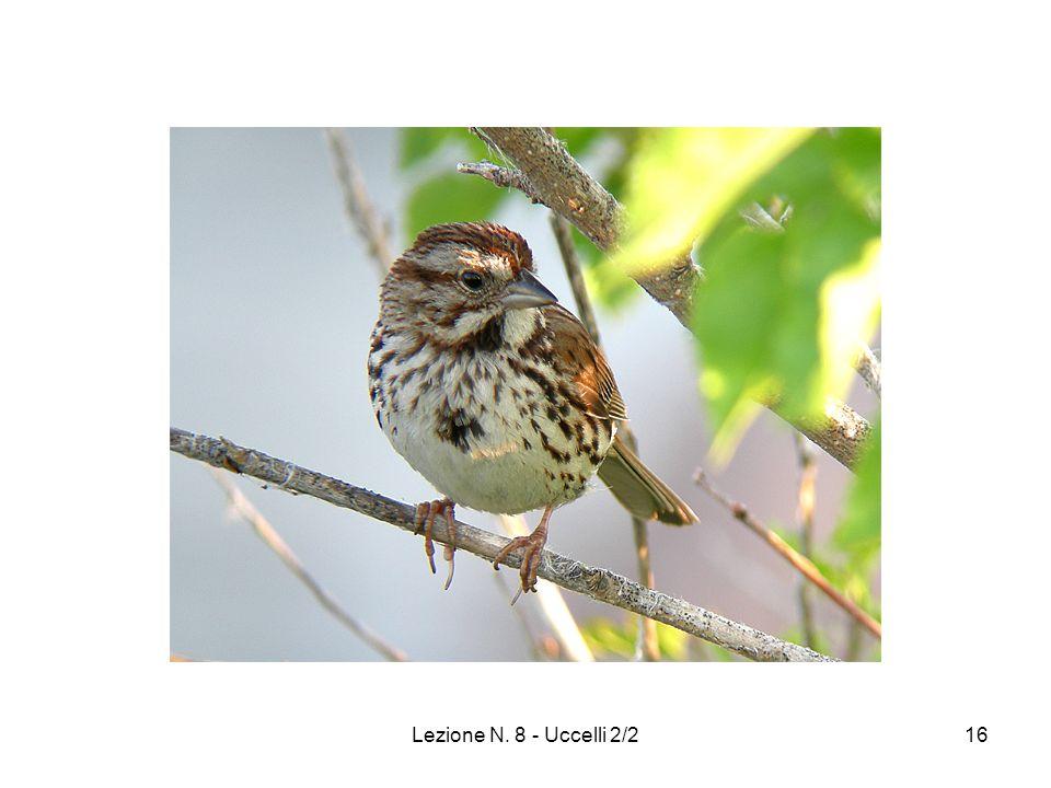 Lezione N. 8 - Uccelli 2/216