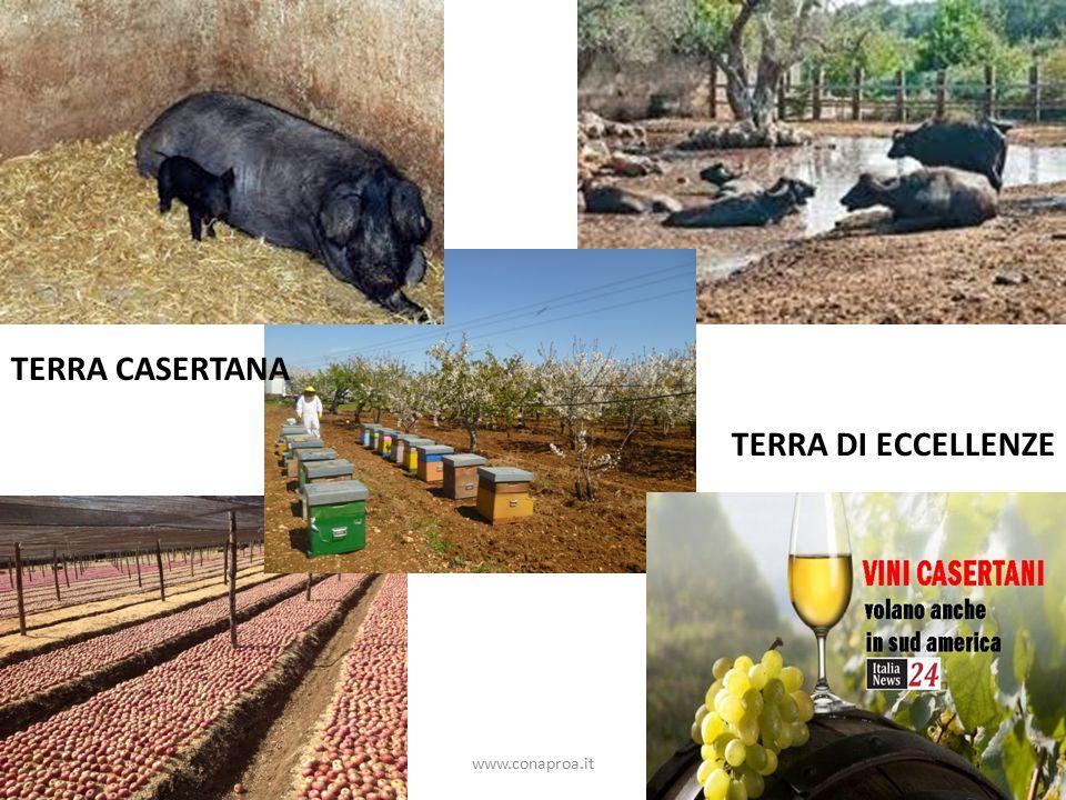 www.conaproa.it TERRA CASERTANA TERRA DI ECCELLENZE