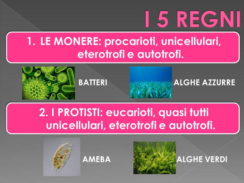 1.LE MONERE: procarioti, unicellulari, eterotrofi e autotrofi. 2. I PROTISTI: eucarioti, quasi tutti unicellulari, eterotrofi e autotrofi. BATTERIALGH