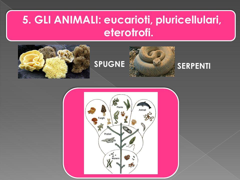 5. GLI ANIMALI: eucarioti, pluricellulari, eterotrofi. SPUGNE SERPENTI