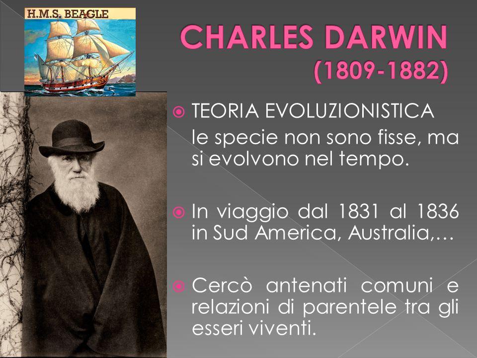  TEORIA EVOLUZIONISTICA le specie non sono fisse, ma si evolvono nel tempo.  In viaggio dal 1831 al 1836 in Sud America, Australia,…  Cercò antenat