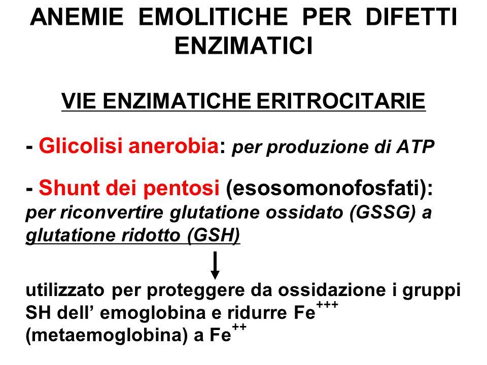 ANEMIE EMOLITICHE PER DIFETTI ENZIMATICI VIE ENZIMATICHE ERITROCITARIE - Glicolisi anerobia: per produzione di ATP - Shunt dei pentosi (esosomonofosfati): per riconvertire glutatione ossidato (GSSG) a glutatione ridotto (GSH) utilizzato per proteggere da ossidazione i gruppi SH dell' emoglobina e ridurre Fe +++ (metaemoglobina) a Fe ++
