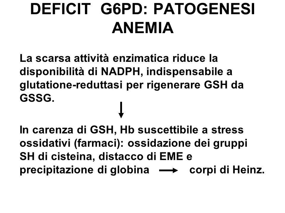 DEFICIT G6PD: PATOGENESI ANEMIA La scarsa attività enzimatica riduce la disponibilità di NADPH, indispensabile a glutatione-reduttasi per rigenerare GSH da GSSG.