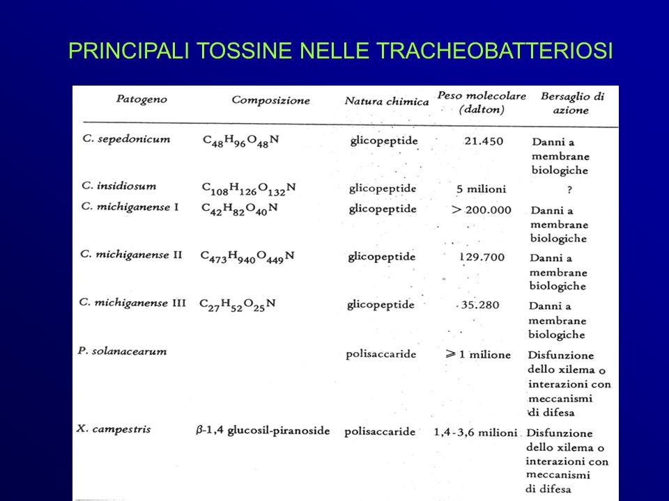 PRINCIPALI TOSSINE NELLE TRACHEOBATTERIOSI