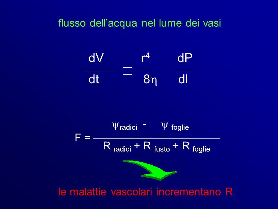 flusso dell'acqua nel lume dei vasi dV r 4 dP dt 8  dl F =  radici -  foglie R radici + R fusto + R foglie le malattie vascolari incrementano R