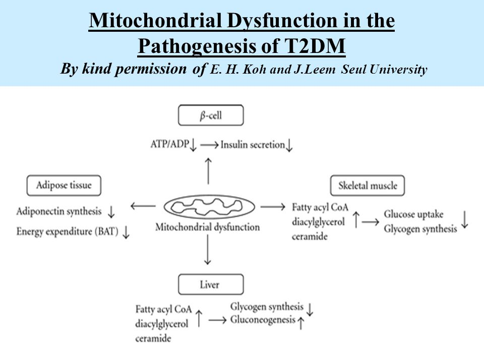 Mitochondrial Dysfunction in the Pathogenesis of T2DM By kind permission of E. H. Koh and J.Leem Seul University