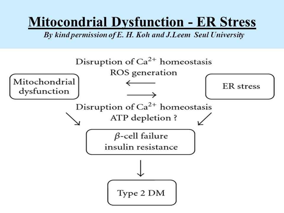 Mitocondrial Dysfunction - ER Stress By kind permission of E. H. Koh and J.Leem Seul University